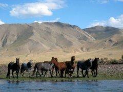 mongolei1.jpg